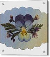 Viola Pressed Flower Arrangement Acrylic Print