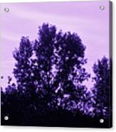 Violet And Black Trees  Acrylic Print