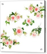 Graden Roses Acrylic Print