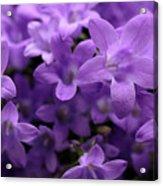 Violet Dream IIi Acrylic Print