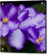 Violet Dreams Acrylic Print