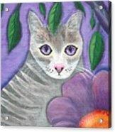 Violet Eyed Cat Acrylic Print