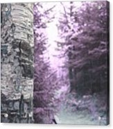 Violet Forest Acrylic Print