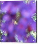 Violet Haze Acrylic Print