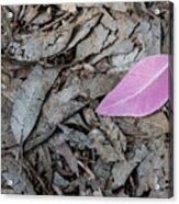 Violet Leaf On The Ground  Acrylic Print