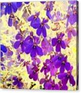 Violet Moths Acrylic Print