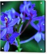 Violet Orchids Acrylic Print