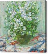 Violet Orychophragmus Acrylic Print
