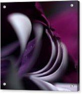 Violet Petals Acrylic Print