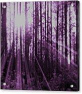 Violet Rays Acrylic Print