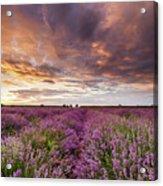 Violet Sunrise Acrylic Print