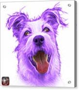 Violet Terrier Mix 2989 - Wb Acrylic Print