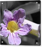 Violet Trumpet Vine Selective Color Acrylic Print