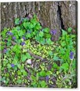Violets Acrylic Print