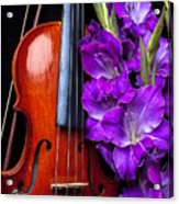 Violin And Purple Glads Acrylic Print by Garry Gay
