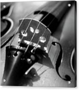 Violin Acrylic Print by Danielle Donders - Mothership Photography