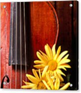 Violin With Daises  Acrylic Print