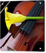 Violin With Yellow Calla Lily Acrylic Print