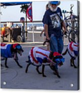 Virginia Beach Dogs  Acrylic Print