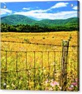 Virginia Fields Of Green Acrylic Print by David Hahn