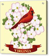 Virginia State Bird Cardinal And Flowering Dogwood Acrylic Print by Crista Forest