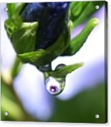 Vision In A Raindrop Acrylic Print