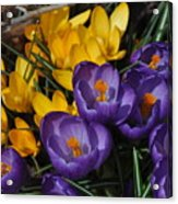 Visions Of Spring Acrylic Print