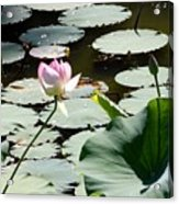 Visit To Lilly Pond Acrylic Print