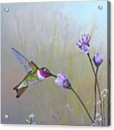 Visiting The Purple Garden Acrylic Print