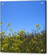Vista Flores Acrylic Print