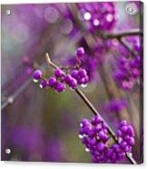 Vivid Beauty Berries Acrylic Print