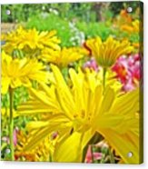 Vivid Colorful Yellow Daisy Flowers Daisies Baslee Troutman Acrylic Print