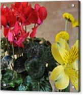 Vivid Colors Acrylic Print