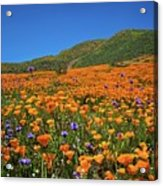 Vivid Memories Of The Walker Canyon Superbloom Acrylic Print