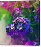 Vivid Purple Acrylic Print