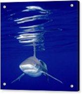 Vivid Shark Reflections Acrylic Print