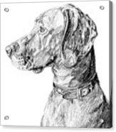 Vizlsa Dog Acrylic Print
