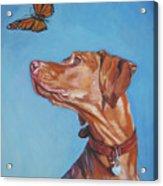 Vizsla And The Butterfly Acrylic Print