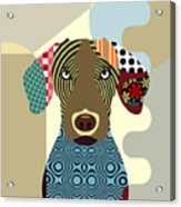 Vizsla Dog Acrylic Print
