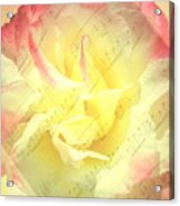 Voice Of The Heart A Rose Portrait Acrylic Print
