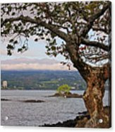 Volcano Through The Tree Acrylic Print