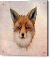 Vulpes Vulpes Acrylic Print