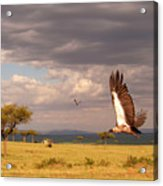 Vulture On The Mara Acrylic Print