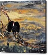 Vulture With Oncoming Storm Acrylic Print