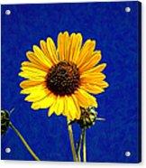 Wabi-sabi Sunflower Acrylic Print