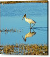Wadding Wood Stork And Reflection Acrylic Print