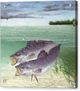 Wade Fishing For Speckled Trout Acrylic Print by Kevin Brant