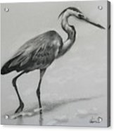 Wader Acrylic Print
