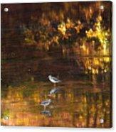Wading In Light Acrylic Print