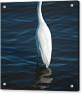 Wading Reflections Acrylic Print